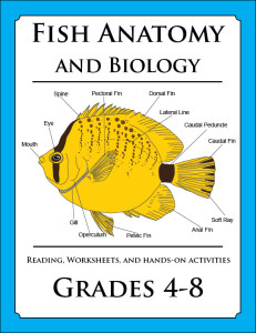 Fish_Anatomy_lesson