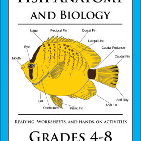 New Marine Biology Lesson Released