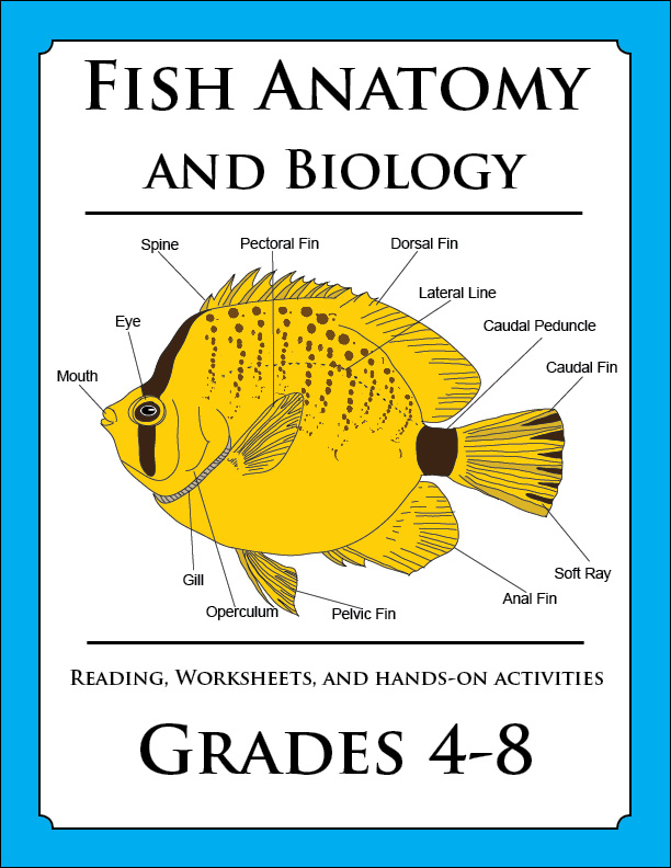 New Marine Biology Lesson Released Lucid Publishing – Marine Biology Worksheets