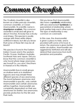 Species Profile Fact Sheet for the common clownfish