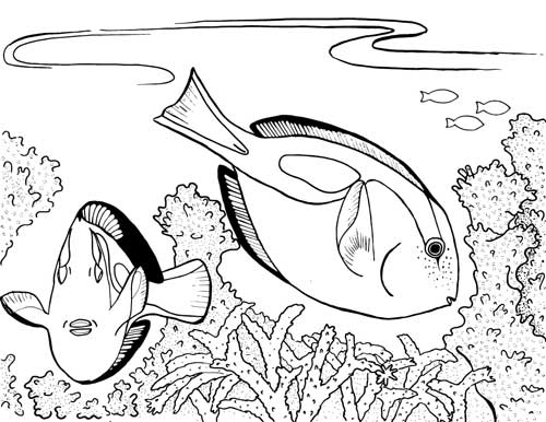 Finding The True Stars Of Ocean A Realistic Sea Life Coloring Book For Future Marine Biologists