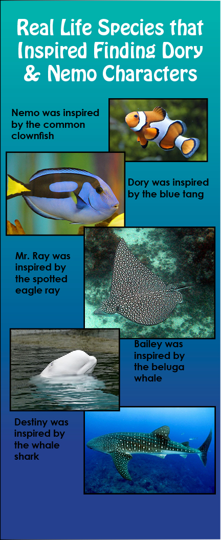 Dory Characters Real Species
